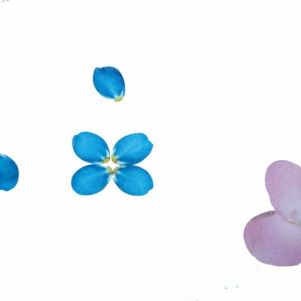 RICO DESIGN -Washi- Tape -Sakura - 200 einzelne Blüten (Kirsche)
